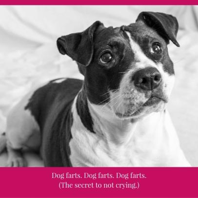 dogfarts