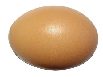 egg_on_white_background
